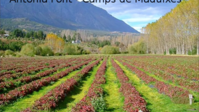 Photo of Camps de maduixes